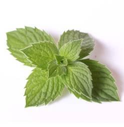 Menthol / Coolada Flavours